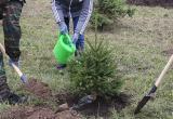 В Брестской области посадили деревьев почти в 8 раз больше, чем предусмотрено на год