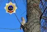Посмотрите на необычного гостя Департамента охраны МВД (видео)