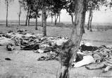 США впервые признали геноцид армян. Турция в бешенстве