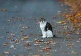 Белоруска отправила по почте мертвого кота своему бывшему мужу