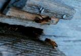 В Бресте в январе от спячки проснулись пчелы (видео)