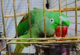 Южные попугаи принесли в Брест богатую палитру красок