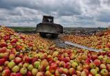 В Смоленске уничтожили 50 тонн привезенных из Беларуси фруктов