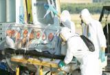 Число погибших от коронавируса достигло 1 115 человек