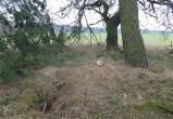 Под Брестом лиса откопала человеческие останки