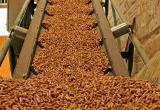 В Ганцевичах построят пеллетный завод