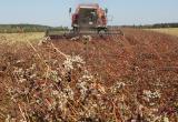 В Беларуси нарастят производство гречки