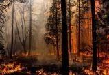 В лесах Брестчины установился высокий класс пожарной опасности