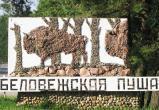 В Беловежской пуще появился новый экологический туристический маршрут