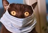 В России впервые коронавирус выявили у кошки