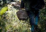 Пенсионерка заблудилась в лесу Ляховичского района