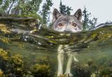 Морские волки: аномалия или отголоски прошлого?