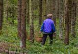 Заблудившуюся пенсионерку нашли в лесу Барановичского района