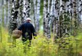 Заблудившегося грибника нашли на третьи сутки в Ляховичском районе