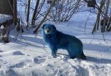 Синих собак заметили в российском Дзержинске