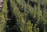 В Брестской области в этом году планируют высадить более 5 тыс. га лесов
