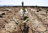 Ученые предрекли лето из шести месяцев к 2100 году