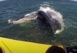 Кит попытался проглотить лодку с людьми (видео)