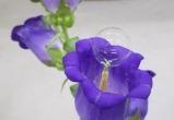 Японцы изобрели способ опылять цветы с помощью мыльных пузырей