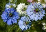Ученые обнаружили растение, блокирующее коронавирус