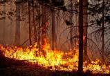 Чудовищные лесные пожары в Греции