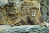 В сафари-парке в Чехии родились редкие львята