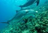 К концу века 95% океанов рискуют стать почти непригодными для жизни